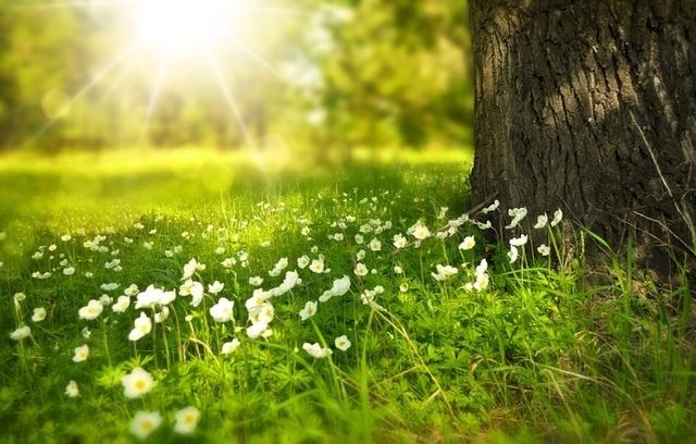 Een nieuwe lente, een nieuw begin:  met krachttraining fit de zomer tegemoet